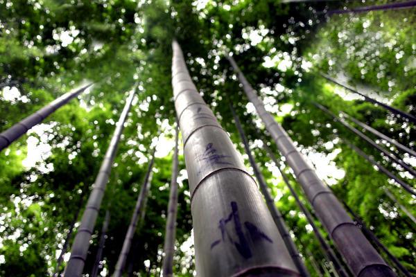 Bamboe Vloeren Outlet : Bamboe vloeren parketboerderij vbn terwispel